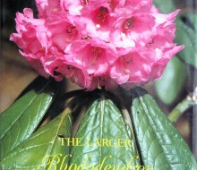 The Larger Rhododendron Species Peter Cox