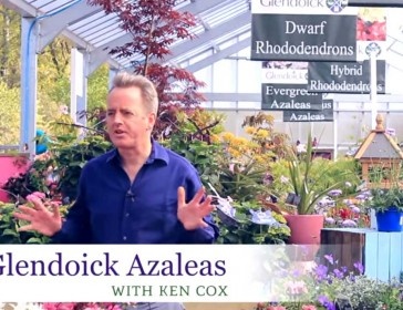 Glendoick Azaleas Video