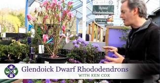 Video Glendoick-Dwarf-Rhododendrons