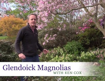 Glendoick Magnolias Video