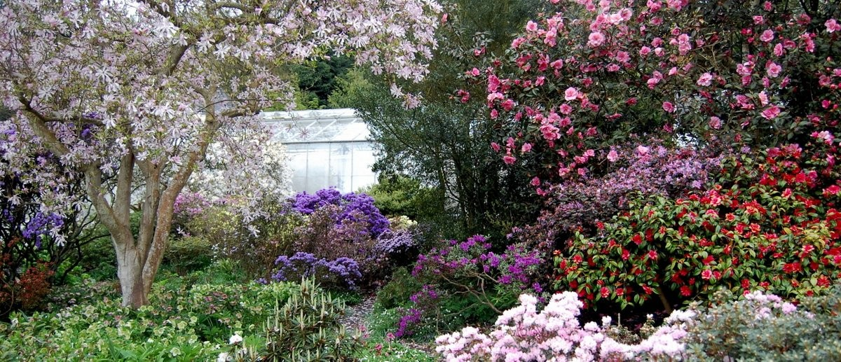 Rhododendrons And Azaleas How To Grow What They Need And How To