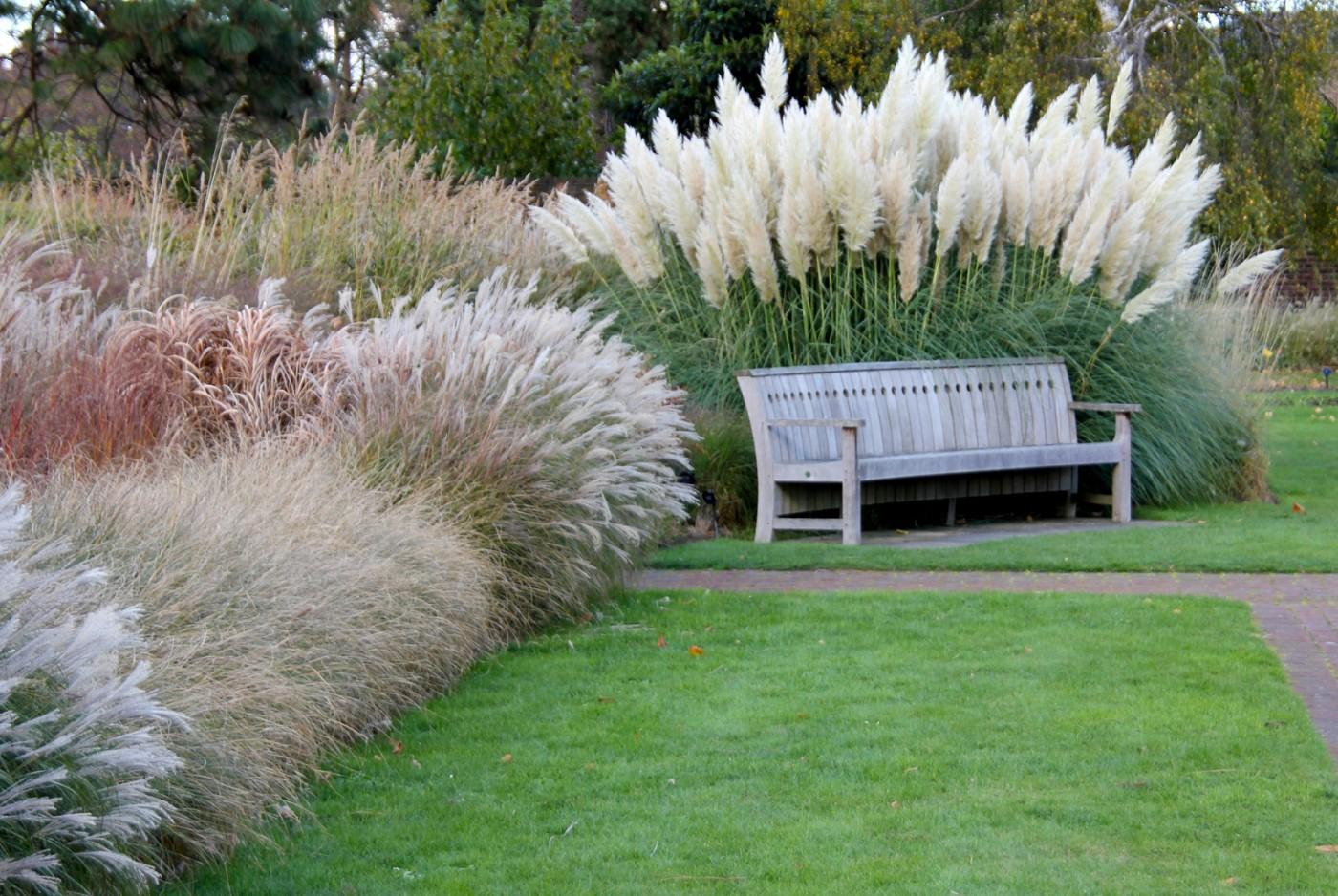 lawn Ornamental grasses shutterstock_119821459