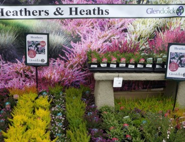 Heathers at Glendoick
