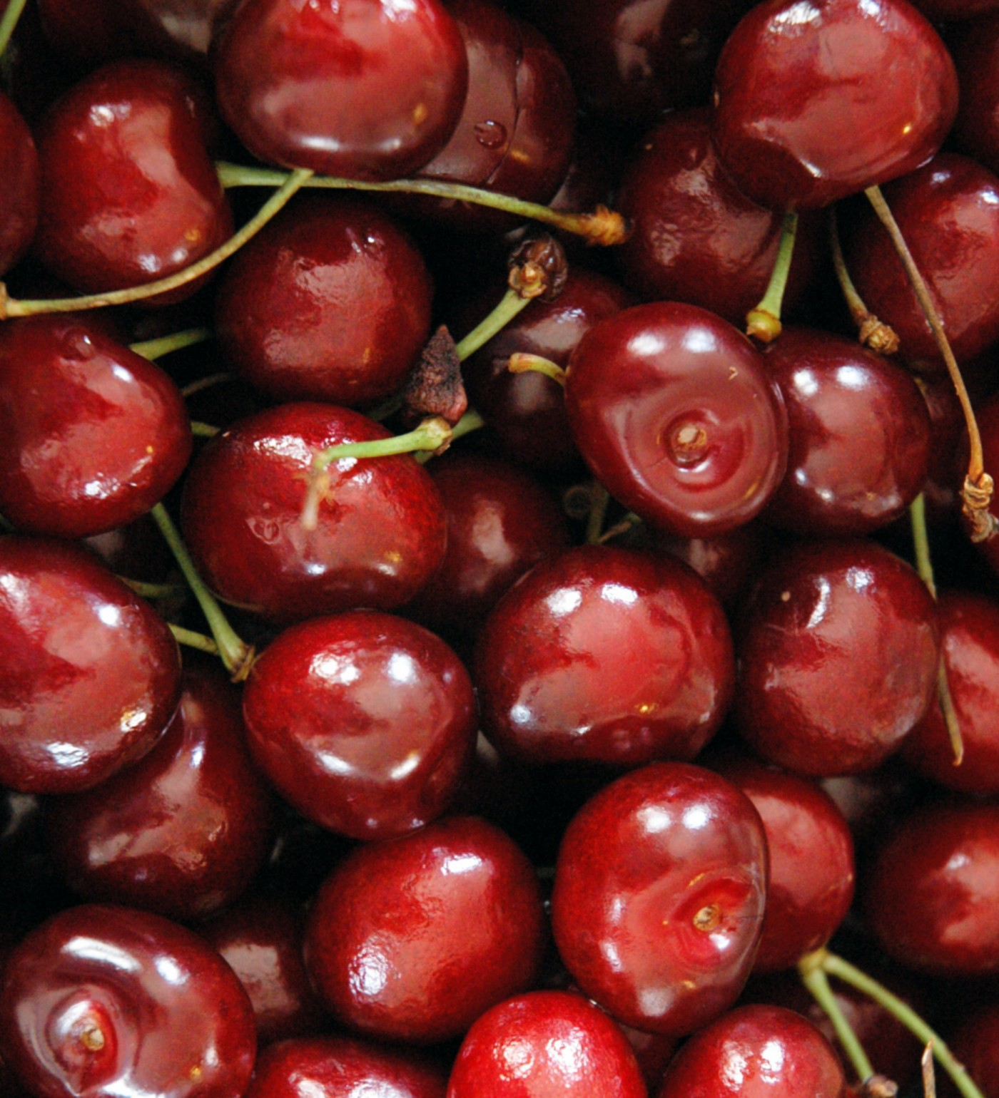 Fruit 2.5C Cherry 'Lapins'