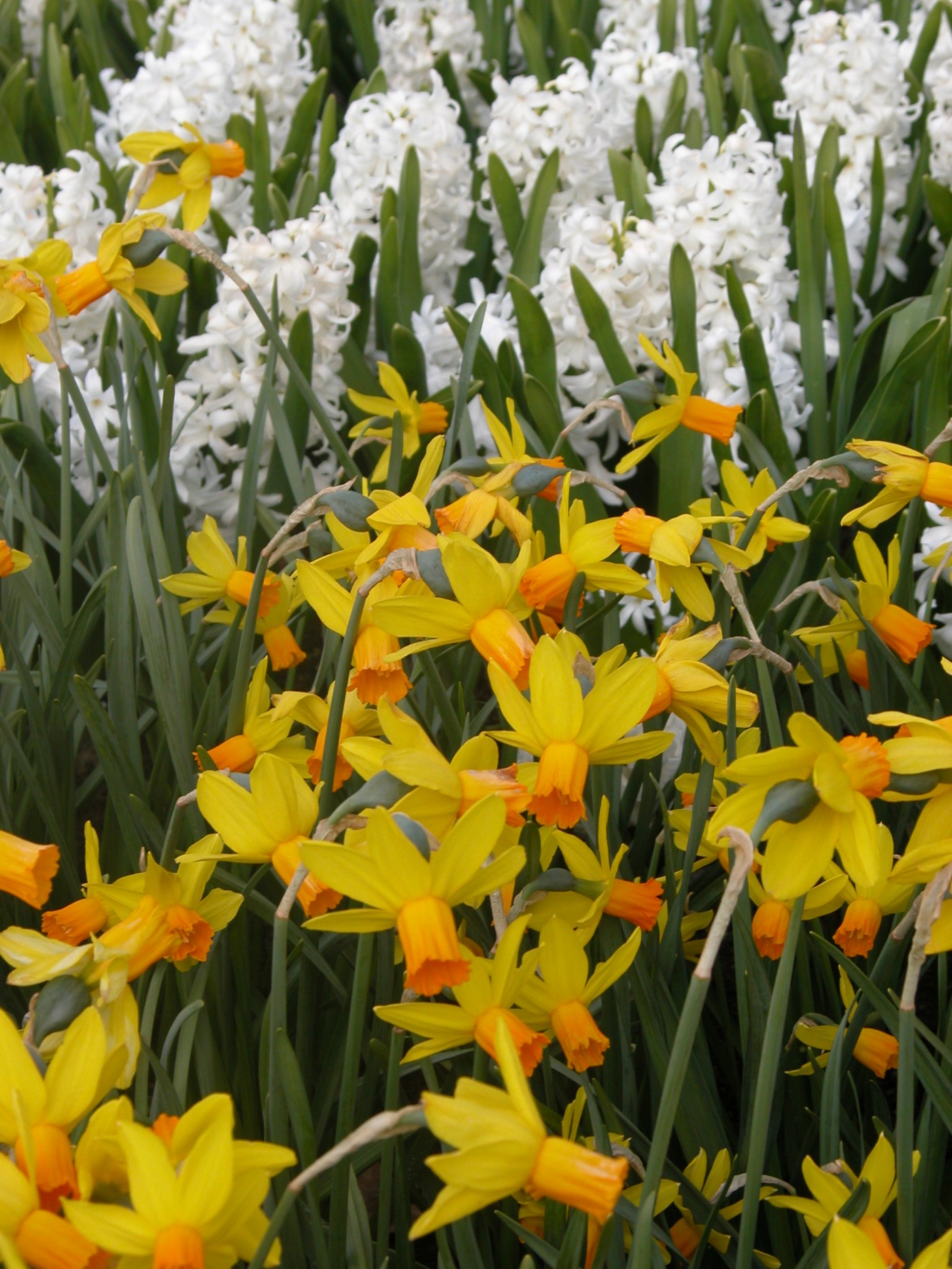 Bulbs Spring And Summer Flowering