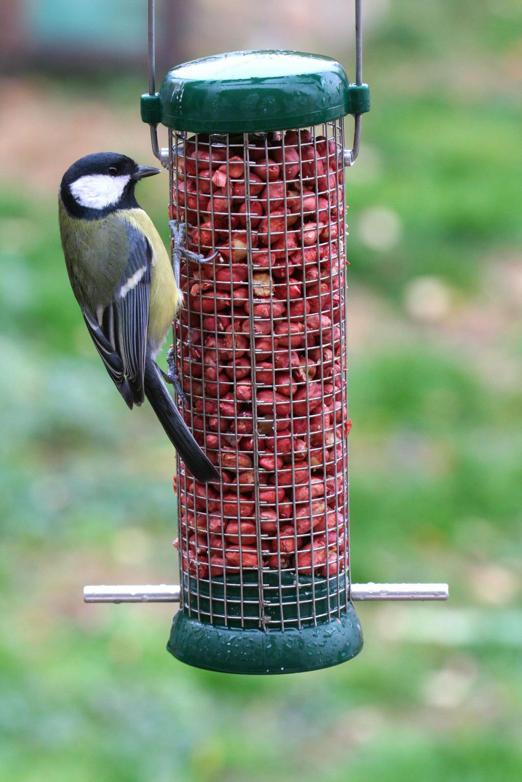 birds bird feeder shutterstock_130475198