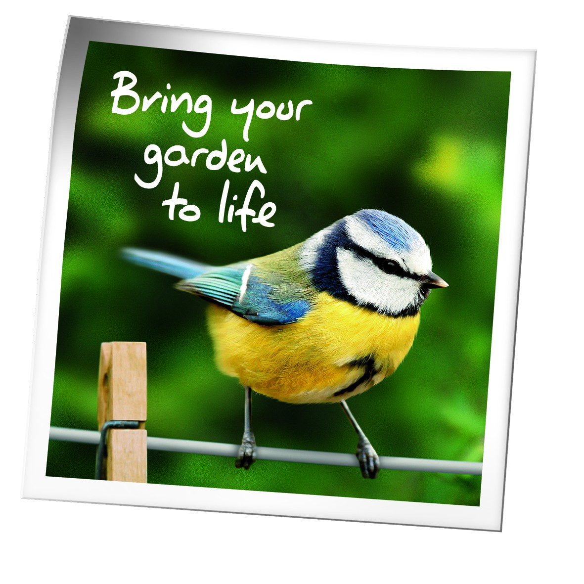 Birds Blue Tit &#039Bring your Garden to Life&#039