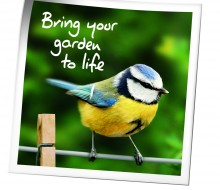 Birds Blue Tit 'Bring your Garden to Life'