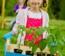Little Blooms Girl with tomatos plants shutterstock_132671183