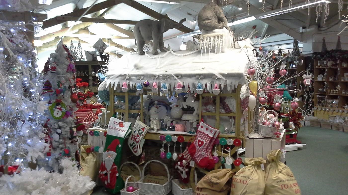Christmas At Glendoick 2015