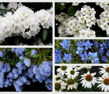 Blue and White Garden 2020